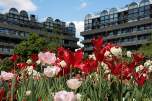 Flower beds at the Barbican